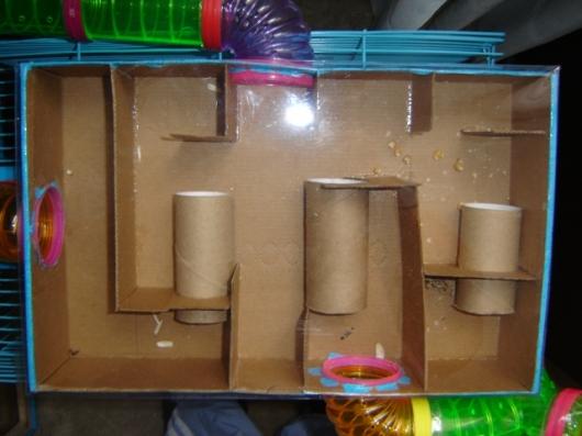 Ahorrador o rata le pongo a mi hamster los tubos de - Como matar las ratas de mi casa ...