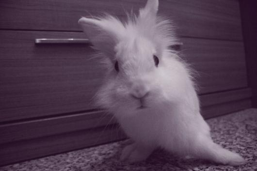Los conejos revisan alli tetona