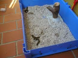 Ahorrador o rata hoy mi padre ha cagado en la arena del - Como matar las ratas de mi casa ...